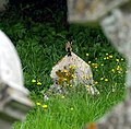A goldfinch in Chislet churchyard. - geograph.org.uk - 491158.jpg
