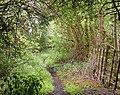 A shady bridleway (2) - geograph.org.uk - 1304990.jpg