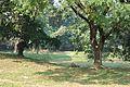 Acharya Jagadish Chandra Bose Indian Botanic Garden - Howrah 2011-01-08 9713.JPG