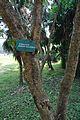 Acharya Jagadish Chandra Bose Indian Botanic Garden - Howrah 2011-01-08 9873.JPG