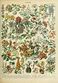 Adolphe Millot fleurs C.jpg