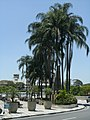 Aeroporto de São Paulo-Congonhas - Avenida Washington Luís, s-nº - Vila Congonhas - panoramio (6).jpg