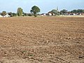 After the beet has gone - geograph.org.uk - 1538643.jpg