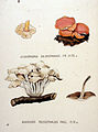 Agaricus polycephalus — Flora Batava — Volume v20.jpg