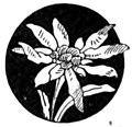 Albini - Voci di campanili (page 91 crop).jpg