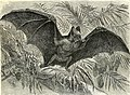 All about animals. Facts, stories and anecdotes (1900) (14591441577).jpg