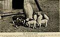 American breeders magazine (1913) (18114790472).jpg