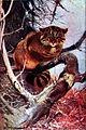 Americana Wildcat.jpg