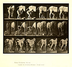 Animal locomotion. Plate 509 (Boston Public Library).jpg