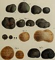 Annales des Sciences Naturelles Botaniques (1841) (14749677735).jpg