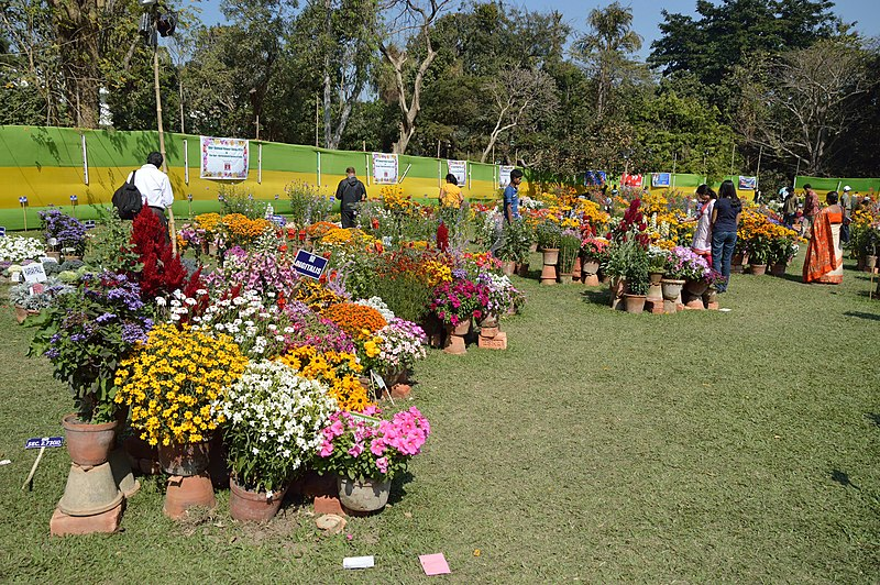File:Annual Flower Show - Agri-Horticultural Society of India - Alipore - Kolkata 2013-02-10 4734.JPG