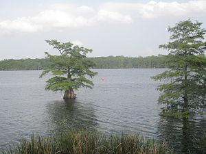 Lake Bruin - Image: Another view of Lake Bruin (LA) IMG 7480 1