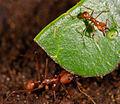 Ants (2532967948).jpg