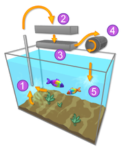 Filtration system in a typical aquarium: (1) Intake. (2) Mechanical filtration. (3) Chemical filtration. (4) Biological filtration medium. (5) Outflow to tank.