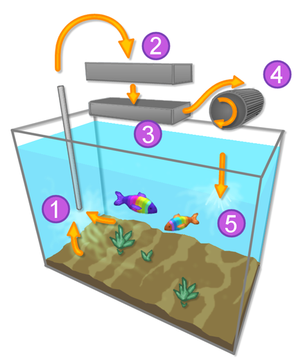 Filtration system in a typical aquarium: (1) intake, (2) mechanical filtration, (3) chemical filtration, (4) biological filtration medium, (5) outflow to tank Aquarium.png