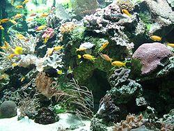 Aquário marinho de arrecifes.