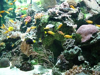 Aquarium tropical - bac marin.JPG