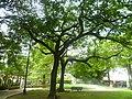 Arboles y sombras - panoramio.jpg