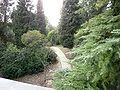 Arboreto ETSI de Montes UPM.JPG