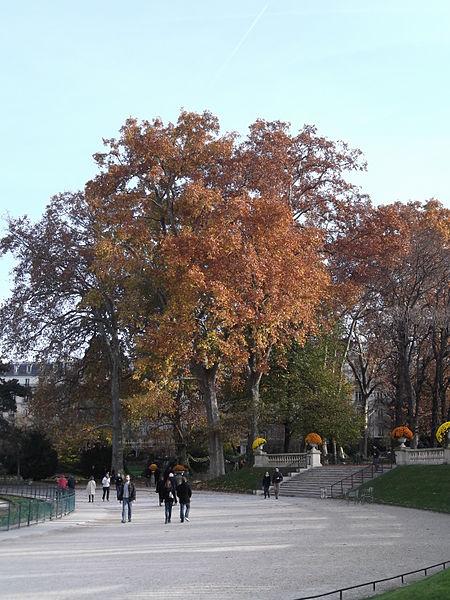 File arbre rougeoyant jardin du luxembourg paris 2011 for Arbres jardin du luxembourg