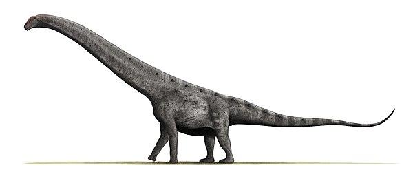 Argentinosaurus BW.jpg