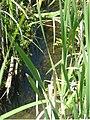 Assessment of aquatic habitats on the Matador Ranch Phillips Co., MT (2007) (20517887641).jpg