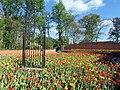 Atlanta Botanical Garden 1.jpg