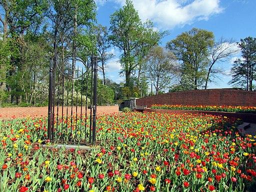 Atlanta Botanical Garden 1
