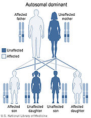 von Willebrand disease types I and II are inherited in an autosomal dominant pattern.
