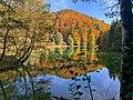 Autumn colour in Arboretum,Lausanne.jpg