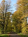 Autumn colours at Chavenage Green - geograph.org.uk - 270278.jpg