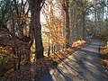 Autumn colours near Kilmuir, Black Isle - geograph.org.uk - 596207.jpg