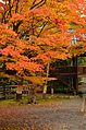 Autumn foliage 2012 (8252586645).jpg