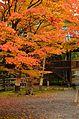 Autumn foliage 2012 (8252586645).jpg