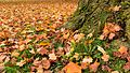 Autumn leaves (10110609464).jpg