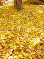Autumn leaves on ground.jpg