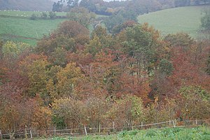 English: Autumn trees near Cwm Lane