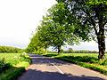 Avenue of Trees - geograph.org.uk - 8743.jpg