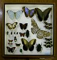 BLW Tray of tropical insects.jpg
