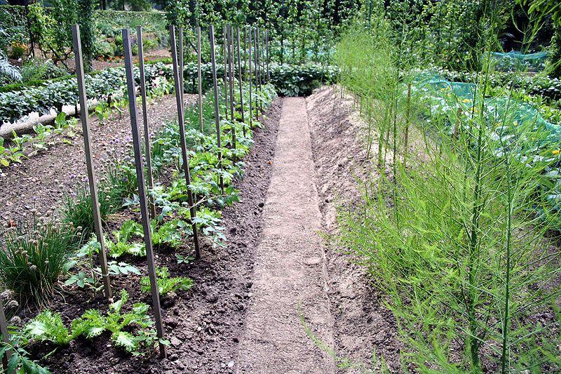 Ogród warzywny - ogródek