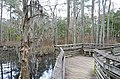 Bald Cypress Trail First Landing State Park-boardwalk-bench (33208555765).jpg