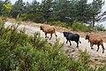 Baltar, Province of Ourense, Spain - panoramio (16).jpg