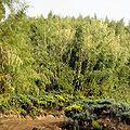 Bamboo zone.jpg