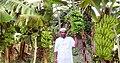 Banana firm in chandpur, matlab 04-09-2019.jpg
