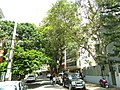 Bangalore Sanjay nagar street trees 3.jpg