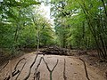 Barrier in the Hambach forest 10.jpg