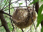 اعشاش الطيور الجزء الاول 180px-Basket_style_nest