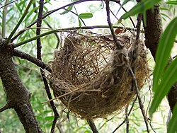 definition of nest