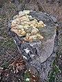 Baumstumpf mit Pilzen.JPG