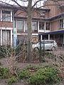 Beatrix tree 1988 - 2.JPG
